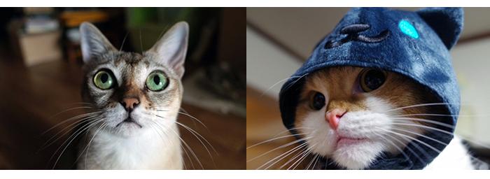 伊藤さんが飼っている猫の「チリちゃん」(左)と「ふくちゃん」。猫の写真を撮っていると時間を忘れてしまうとか(写真は伊藤さん撮影)
