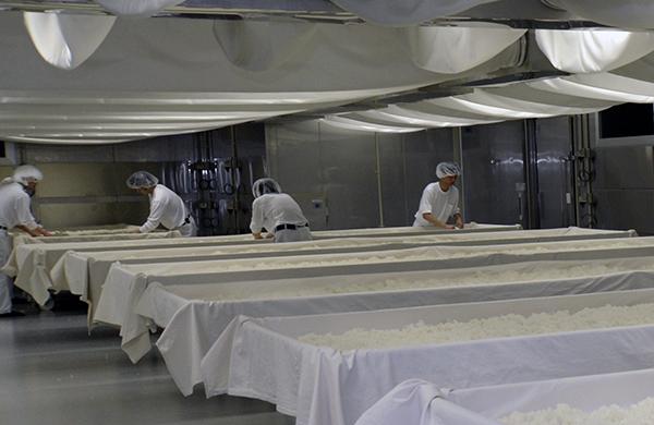 旭酒造の麹室では若い社員が麹づくりに励んでいる。