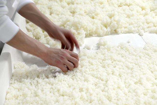 麹づくりは手作業で行うことで適切な水分状態を保つ。