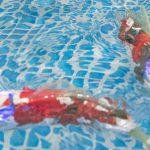 【コンテンツ東京2016/先端コンテンツ技術展】観賞魚ロボットの真の力は? AIRO